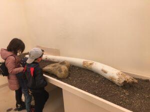 Animali preistorici al Museo Ridola