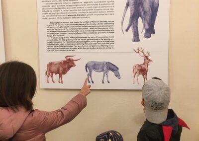 Pannello con animali preistorici raffigurati al Museo Ridola